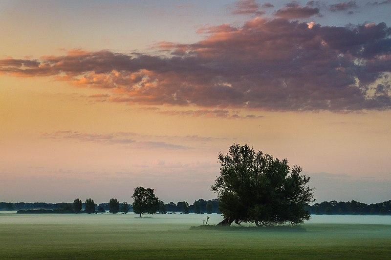 File:Nebel am Morgen.jpg