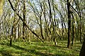 Nekhvoroshcha Volodymyr-Volynskyi Volynska-Nekhvoroshschi nature reserve-view of the nothern part-1.jpg