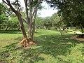 New Town, Polonnaruwa, Sri Lanka - panoramio (9).jpg