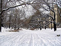 New York. Central Park. Snowy (2797349607).jpg