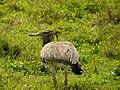 Ngorongoro Crater (56) (14148847614).jpg