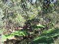 OIC torrens river near brickworks 1.jpg