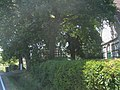 Oberbauerschaft Juni 2009 (44).jpg