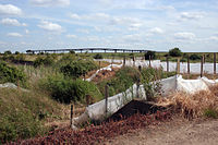 Occidental jetty and reed beds at Canvey Wick.jpg