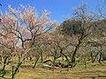 Ogose Ogosebairin State Of The Park 1.JPG
