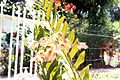 Orchidée (3237445949).jpg