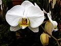 Orchid 20120211.JPG