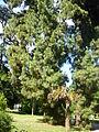 Orto botanico di Napoli 218.JPG