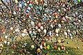 Ostereierbaum, mit 10.000 Eiern geschmückt IMG 0012WI.jpg