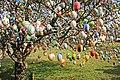 Ostereierbaum, mit 10.000 Eiern geschmückt IMG 9926WI.jpg