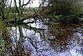 Overgrown pond near Shapwick - geograph.org.uk - 1061167.jpg