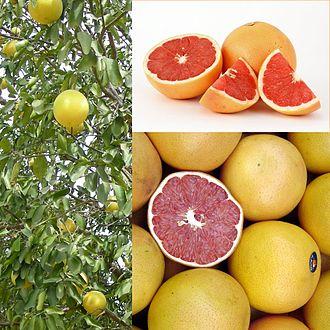 Grapefruit - Image: Owoce Grejpfrut