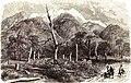 P.B. Percée dans une forét de la Grande Tchetchenia (TyP. J. Claye). (Fussart). Floriant Gille. Lettres sur le Caucase et la Crimée. 1859.jpg