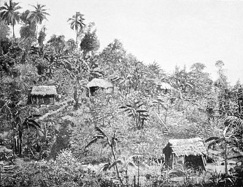 PSM V44 D505 Native hillside homes surrounded by bananas.jpg