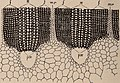 Paléontologie végétale cryptogames cellulaires et cryptogames vasculaires (1914) (14763223542).jpg