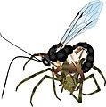 Parasite170127-fig S1 ovipositor Pimplinae Brachyzapus nikkoensis.jpg