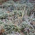 Park Cronesteyn Frost (31392482700).jpg