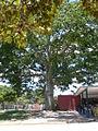 Parque del Este 2012 008.JPG