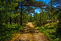Path on Fjärdlång Island, Fjärdlång, Stockholm (Sweden) - panoramio (1).jpg