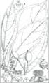 Peridiscus lucidus (Hooker).png