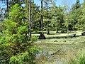 Peterson Lake Nature Center Collierville TN 19.jpg