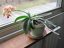 http://upload.wikimedia.org/wikipedia/commons/thumb/8/8e/Phototropism.jpg/220px-Phototropism.jpg