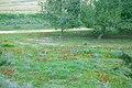 PikiWiki Israel 18953 Anemones in Beeri forest.JPG