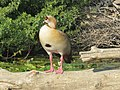 PikiWiki Israel 53071 wildlife animals.jpg