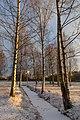 Piskarevskiy Park - panoramio.jpg