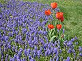 Poland. Warsaw. Powsin. Botanical Garden 099.jpg