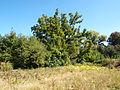 Poltava Botanical garden (71).jpg