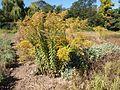 Poltava Botanical garden (75).jpg