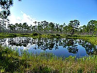 Pond in Flatwoods (4884909518).jpg