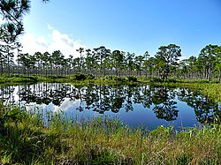 Pond in Flatwoods (4884909518).jpg