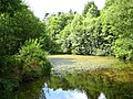 Pond in Lord's Wood - geograph.org.uk - 1425700.jpg