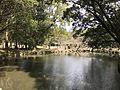 Pond of Miyazaki Shrine from Shinkyo Bridge 2.jpg