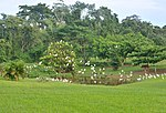 Pond with egrets.jpg