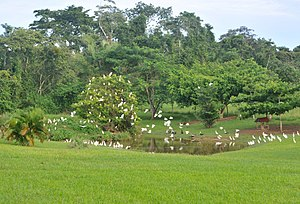 Belize Bird Rescue - Pond with egrets at Belize Bird Rescue