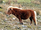 Pony With A Fright Wig.jpg