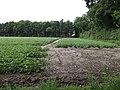 Potato field at Spicer's Corner - geograph.org.uk - 478172.jpg