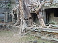 Preah Khan - 008 Tree growing over Buildings (8578909197).jpg