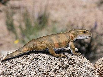 Rhynchocephalia - Life reconstruction of Priosphenodon avelasi
