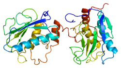 Protein MMP3 PDB 1b3d.png
