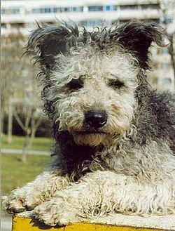 Dog Show Wiki