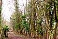 Quarry Moor (111).JPG
