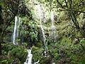 Queimadas, babérlombú erdő.jpg