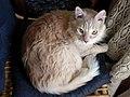 Ramses cat.jpg