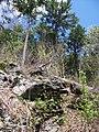 Raymondskill Falls - Pennsylvania (5677486233).jpg