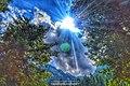 Rays of Nature.jpg
