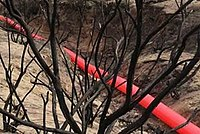 Red Line in the burnt forested near Los Angeles.jpg